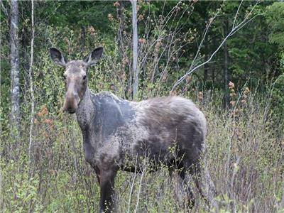 Moose spotting,stunning fall colors. Dates open