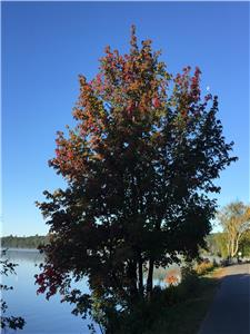 LAKE OF BAYS COTTAGE~Come visit Algonquin Park,see the fall colours~stay in your own private cottage