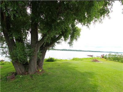 Lake Scugog Whispering Willow